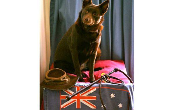 stockwhipdog